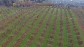 Aerial video of autumn garden fields stock footage