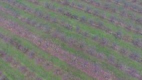 Aerial video of autumn garden fields stock video footage