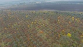 Aerial video of autumn garden fields. In Ukraine stock video footage