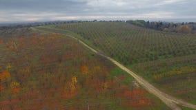 Aerial video of autumn garden fields. In Ukraine stock video