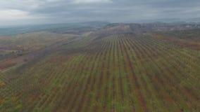 Aerial video of autumn garden fields. In Ukraine stock footage