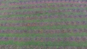Aerial video of autumn garden fields stock video