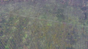 Aerial video of autumn garden fields stock footage