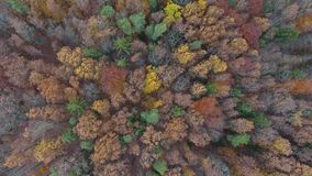 Colourful forest trees in autumn stock video