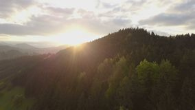 Aerial view over green forest at sunset. Evening flight above trees waving in the wind. Aerial video of beautiful evening flight over forest trees moving in the stock footage