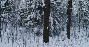 Aerial video beautiful forest landscape in winter. Camera moving in left.  stock video