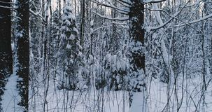 Aerial video beautiful forest landscape in winter. Camera moving in left slowly.  stock video