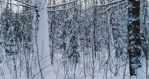 Aerial video beautiful forest landscape in winter evening. Camera moving in left.  stock video