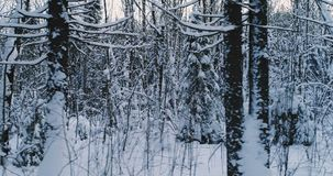 Aerial video beautiful forest landscape in winter evening. Camera moving on right high speed. Aerial video beautiful forest landscape in winter evening. Camera stock video