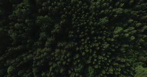 Aerial video - drone flight over big green forest in Poland, national park, summer 2019 stock video footage