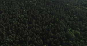 Aerial video - drone flight over big green forest in Poland, national park, summer 2019 stock video