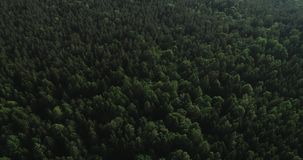 Aerial video - drone flight over big green forest in Poland, national park, summer 2019 stock footage