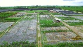 Aerial video of farmland in Homestead Florida stock video footage