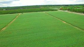 Aerial video of farmland in Homestead Florida stock video