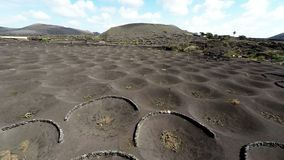 Aerial video footage of the La Geria vineyard on black volcanic soil in Lanzarote, Canary Islands stock footage
