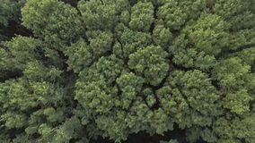 Aerial video of a forest wave in the wind. Aerial video of a green forest at sunny day - the trees blow in the wind. Drone moving at high altitude. Aerial stock stock footage