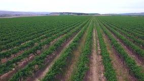 Aerial video grape farm