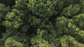 Aerial video of a forest wave in the wind. Aerial video of a green forest at sunny day - the trees blow in the wind. Drone moving at high altitude. Aerial stock stock video