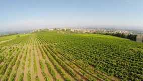 Aerial video of the old town Carcassonne from the vineyard. Southern France stock video