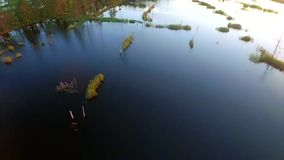 Aerial video over swamp stock video footage