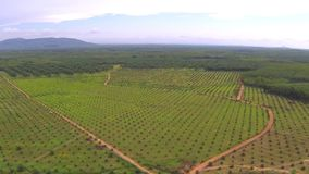 Aerial video of Thai jungle and plantation stock video