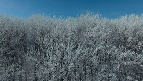 Flying above the forest in winter. Aerial video of a winter forest at sunny day. Drone moving low altitude. 4K Aerial stock footage shot at winter season time stock video