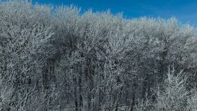 Flying above the forest in winter. Aerial video of a winter forest at sunny day. Drone moving up at lowaltitude. 4K Aerial stock footage shot at winter season stock footage