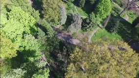 Aerial videography spring park, woods. On a sunny day stock video footage