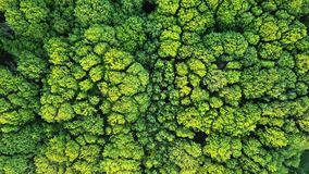 Aerial viev green forest on a spring day, natural background. Photo from the drone. Aerial viev deciduous forest. Ecological environment concept. Natural stock photos