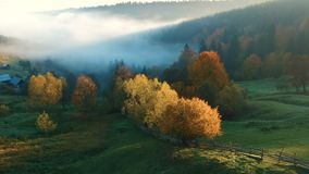 Autumn aerial view of the forest. Aerial view above the colorful forest, in autumn stock footage