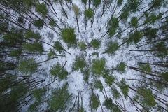 Aerial View above Forest Trees at winter. Aerial View video above Forest Trees at winter stock video