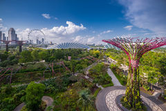 Aerial view above Gardens by the Bay Stock Photo