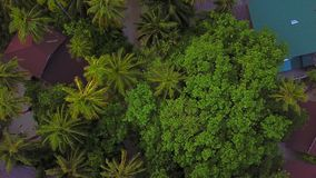 Aerial view from above of tropical palms and trees on resort island, camera is descending, copter goes down stock footage