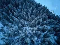 Aerial view from above of winter forest covered with snow. Fir tree forest top view. Lonely hermit house with warm royalty free stock image