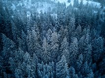 Aerial view from above of winter forest covered in snow. Pine tree and spruce forest top view. Cold snowy wilderness royalty free stock photos