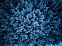 Aerial view from above of winter forest covered in snow. Pine tree and spruce forest top view. Cold snowy wilderness. Drone landscape photo. Moody cold blue stock photo