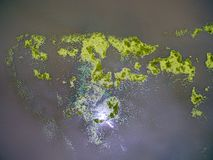 Aerial view abstract of green duckweed in river Stock Images