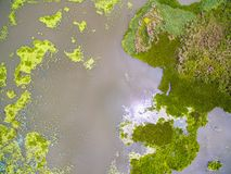Aerial view abstract of green duckweed and water lettuce stock image