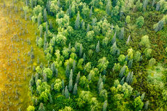 Aerial view of an abundance of varieties of tree and other vegetation bloom on the summer taiga. Aerial view of an abundance of varieties of tree and other Royalty Free Stock Image