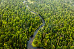 Aerial view of an abundance of varieties of tree and other vegetation blooming on  the river on the taiga in summer. Aerial view of forest canopy  and abundance Stock Photo