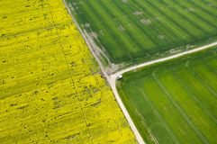 Aerial view of affected rapeseed crops fields. Aerial view of drought affected rapeseed (brassica napus) and green crops fields Royalty Free Stock Images