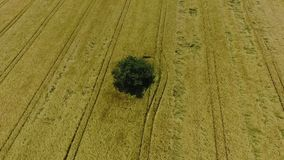 Aerial view of agricultural area stock video footage