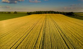 Aerial view of agricultural fields. Aerial image of yellow wheat field before harvest time in plains shoot from drone Stock Image