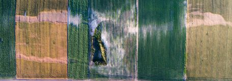 Aerial view of agricultural fields with problematic parts. Aerial view of cultivated agricultural field with green crops and problematic parts of land Stock Photos