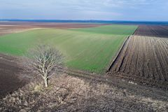 Aerial image of agricultural fields. Aerial view of agricultural green and brown hilly fields in perspective, shoot from drone in winter time Stock Photography