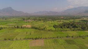 Agricultural land in indonesia. Aerial view agricultural land with sown green,tobacco field in countryside. farmland with tobacco plantation agricultural crops stock video