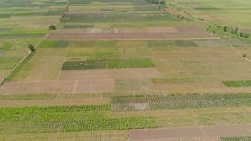 Agricultural land in indonesia. Aerial view agricultural land with sown green,tobacco field in countryside. farmland with tobacco plantation agricultural crops stock video footage
