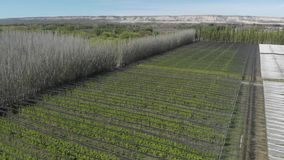 Aerial view of agricultural production. Rows of apple or pear trees on a farm in a valley.
