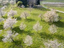 Aerial view of blooming orchard garden over the hill royalty free stock photo