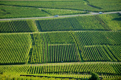 Aerial view of Alsace-Lorraine vineyards, France Stock Photography